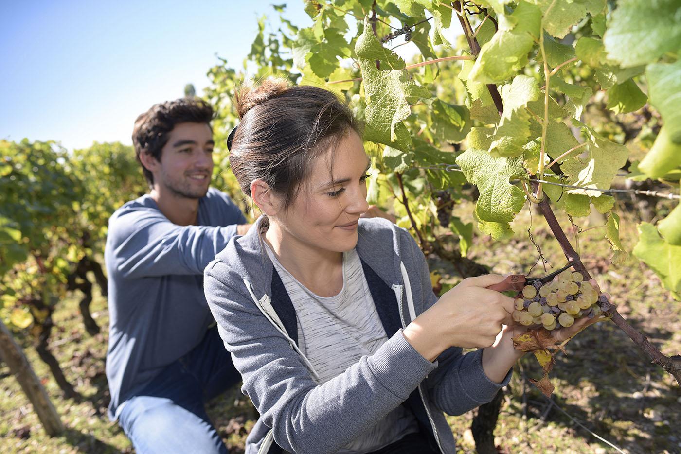 wijnmakers